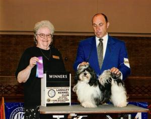 Black and white akc champion havanese dog