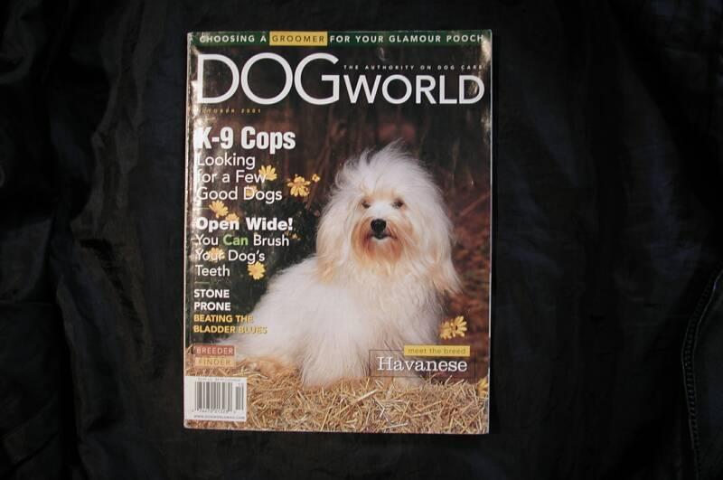 KASE Havnese dog on the cover of Dog World Magazine