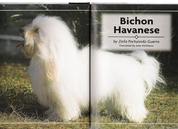 KASE Havanese dog in a book