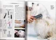 How to brush a Havanese dog