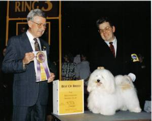white havanese westminster dog show best of breed winner with puppies for sale
