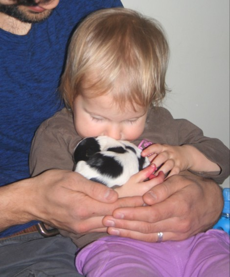 Baby kissing havanese puppy