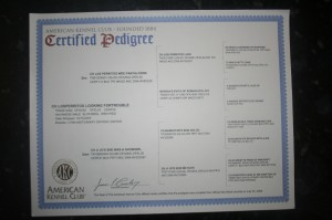 certified havanese pedigree