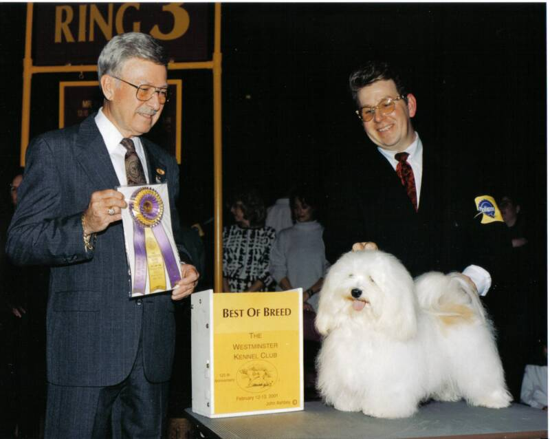 White Havanese westminster dog show best of breed winner puppies for sale