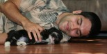 Black and white havanese puppy resting with its owner