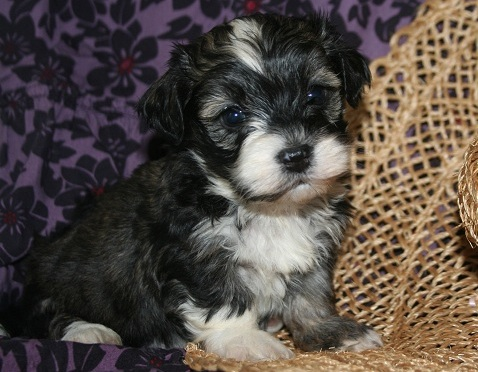 New puppy kit: what do i need to buy?