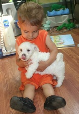 little children boy holding white havanese puppy