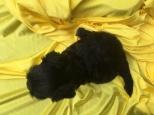 faith puppy 1